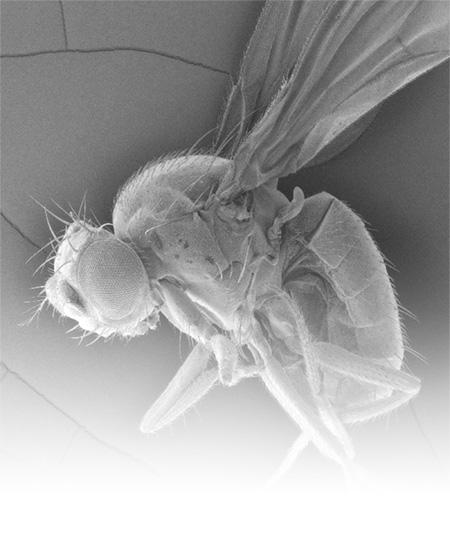 fly-temporary-photo